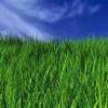 Brummel Lawn Mowing